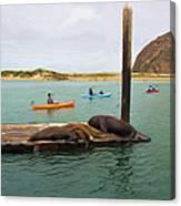 Curious About Sea Lions Canvas Print