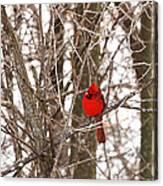 Curious Cardinal Canvas Print