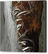 Curly Bark Of A Palm Tree Canvas Print