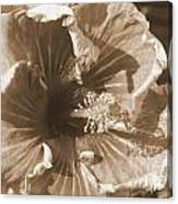 Curly Hibiscus In Sepia Canvas Print