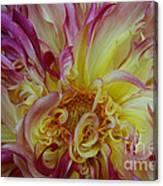 Curly Petals Canvas Print