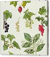 Currants And Berries Canvas Print
