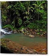 Curtis Falls - Mt Tamborine Canvas Print