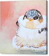 Cute Baby Birdy Canvas Print