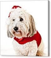 Cute Dog In Santa Outfit Canvas Print