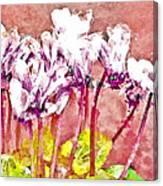 Cyclamen Watercolor Canvas Print