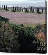 Cypress Allee Canvas Print