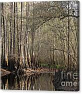 Cypress And Water Canvas Print