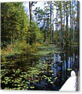 Cypress Swamps And Black Water Canvas Print