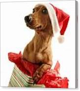 Dachshund Wearing A Santa Hat Canvas Print