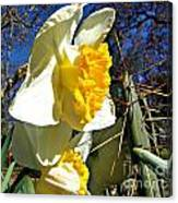 Daffodil And Cactus Canvas Print