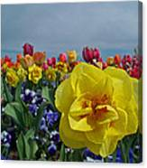 Daffodil Up Front Canvas Print