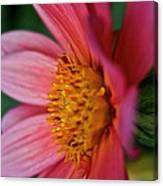 Dahlia Candles Canvas Print