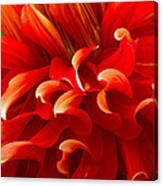 Dahlia Close Up Canvas Print