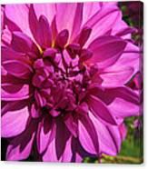 Dahlia Describes The Color Pink 1 Canvas Print