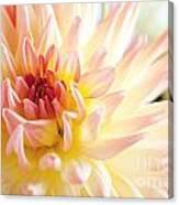 Dahlia Flower 01 Canvas Print