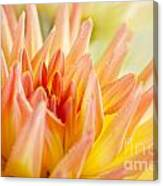 Dahlia Flower 06 Canvas Print