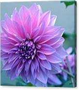 Dahlia Flower2 Canvas Print