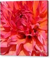 Dahlia Named Oreti Lass Canvas Print