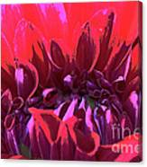 Dahlia Over Exposed Canvas Print