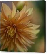 Dahlias Pastel Canvas Print