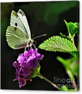 Dainty Butterfly 2 Canvas Print