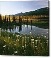 Daisies Grow Near A Lake In Yoho Canvas Print
