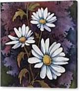 Daisies IIi Canvas Print