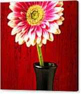Daisy In Black Vase Canvas Print