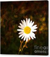 Daisy Is Single But Not Lonely  Canvas Print