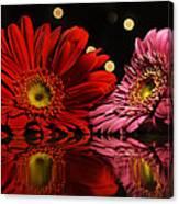 Daisy Mates Canvas Print