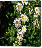 Daisy Production Line Canvas Print