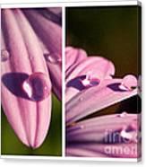 Daisy Rain  Canvas Print