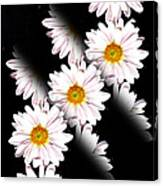 Daisy Split Canvas Print