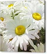 Daisy Summer Garden Canvas Print