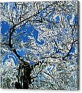 Dali Spring 5 Canvas Print