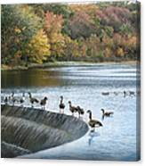 Dam Geese Canvas Print