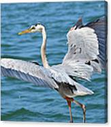 Dancing By Water Canvas Print