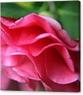 Dancing Petals Of The Camellia Canvas Print