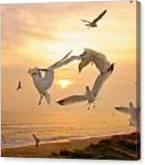 Dancing Seagulls Canvas Print