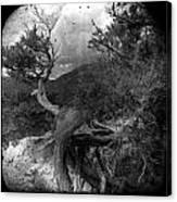 Dancing Wind Canvas Print