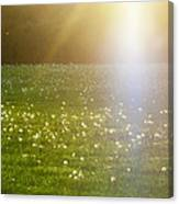 Dandelion And Meadows In Back-light Canvas Print