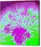 Dandilion Colorized I Canvas Print