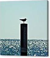 Dangerous Bird Perch Canvas Print