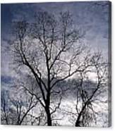 Dark And Stromy Night Trees Canvas Print