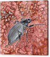 Darkling Beetle Canvas Print