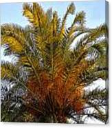 Date Palm Canvas Print