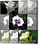 Datura - Ballerina Series Canvas Print
