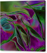 Datura Dreams Canvas Print