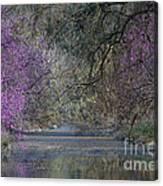 Davis Arboretum Creek Canvas Print